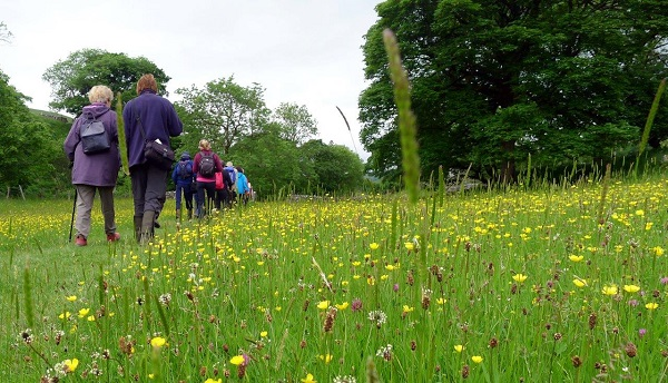 Guided meadow walk in the Yorkshire Dales