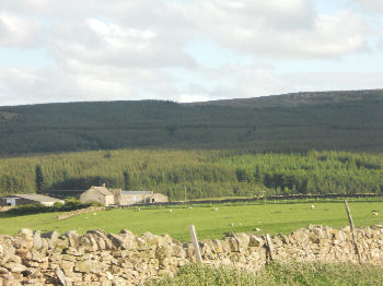 Stang Forest, overlooking Teesdale and the Tees Valley